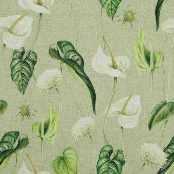 Canvas bedruckt Anthurien weiß  Blätter grün